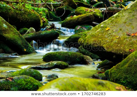 mountain stream in the smokies stock photo © wildnerdpix