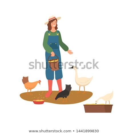 Farming Woman, Lady Feeding Hens with Wheat Vector Stock photo © robuart