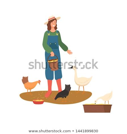 farming woman lady feeding hens with wheat vector stock photo © robuart