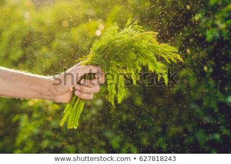 Monte funcho mão homem água Foto stock © galitskaya