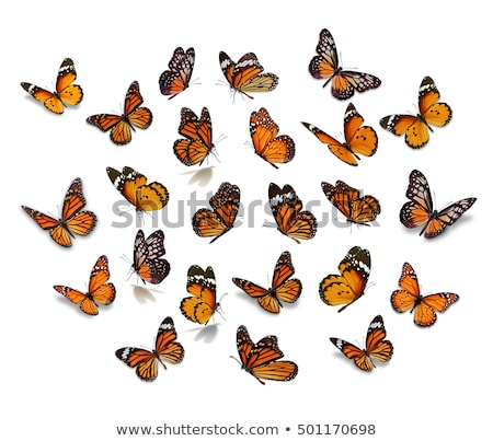 Orange monarch butterfly set isolated background Stock photo © cienpies