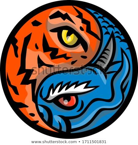 Sárkány tigris szem bent yin yang szimbólum Stock fotó © patrimonio