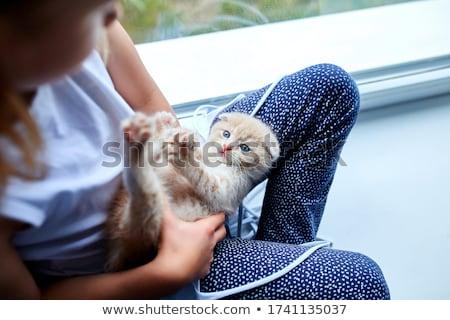 Brit kicsi játékos kiscica otthon ablak Stock fotó © Illia