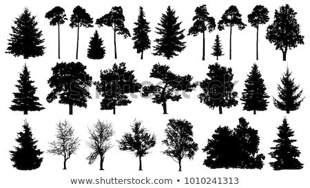 Photo stock: Arbre · silhouette · illustration · blanche · printemps