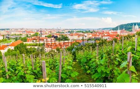 vinha · vinícola · República · Checa · natureza · folha · plantas - foto stock © rognar