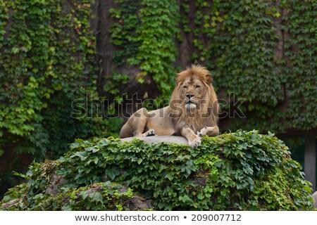 Chicago zoo charakter Zdjęcia stock © rabbit75_sto