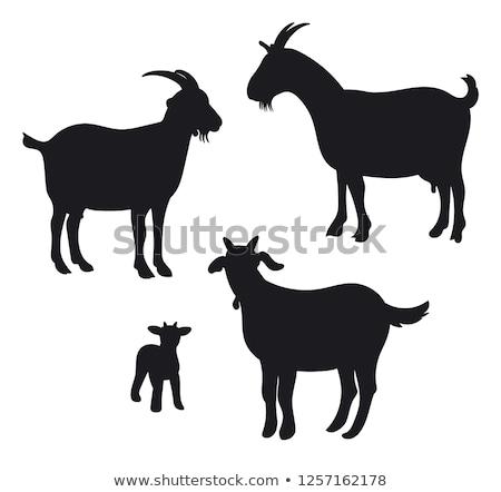 Sziluett kecske farm fekete fej fehér Stock fotó © perysty