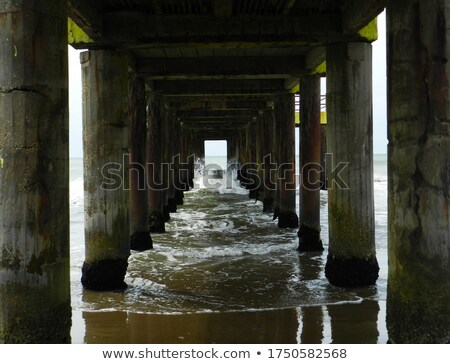 yaz · puslu · sahil · görmek · çiçek · su - stok fotoğraf © neirfy