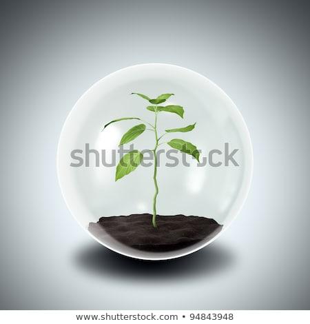 工場 保護された ガラス 自然 緑 葉 ストックフォト © SSilver