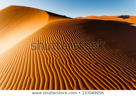 Patterns in the sand in the Namib desert Stock photo © michaklootwijk