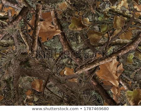 álca végtelenített természetes lomb absztrakt ősz Stock fotó © boroda