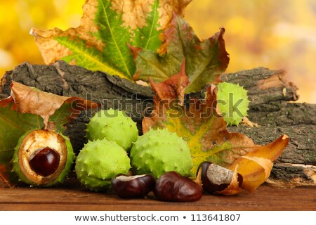 Group of many chestnuts with autumn leaves Stock photo © dla4