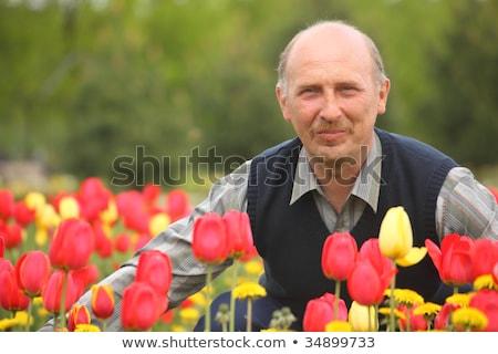 portret · dojrzały · mężczyzna · relaks · trawy · człowiek - zdjęcia stock © paha_l
