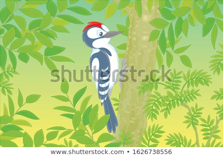 Woodpecker in the forest Stock photo © Ustofre9