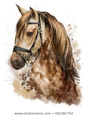 head horse with harness. Animal Stock photo © ISerg