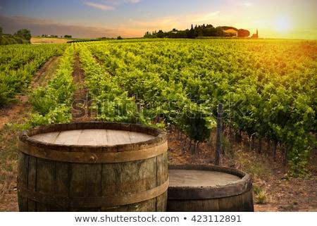 Uvas vid maduro listo cosecha Foto stock © stevanovicigor