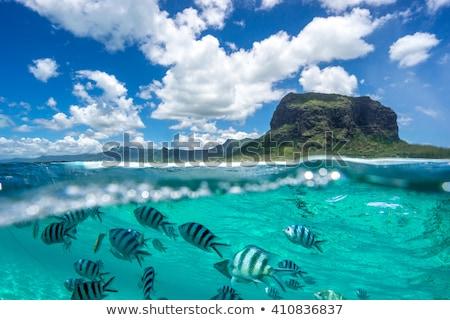 Butterflyfish under the ocean Stock photo © bluering