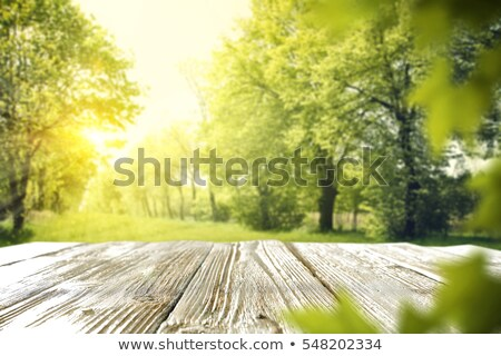 Times tables on forest background Stock photo © colematt