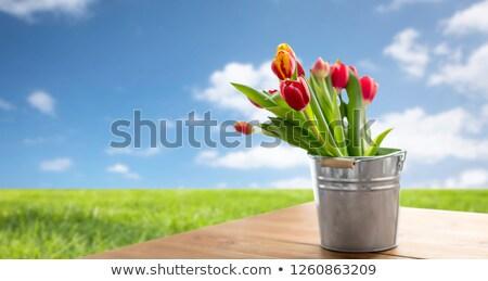 新鮮な · 黄色 · 春 · チューリップ · 花 · 自然 - ストックフォト © dolgachov