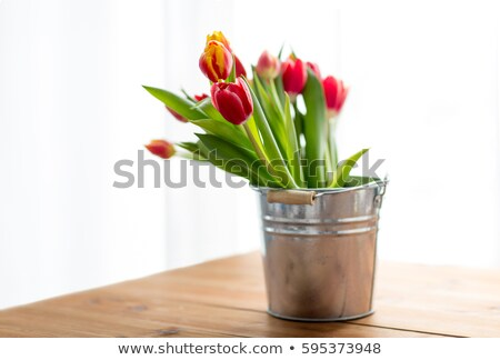 red tulip flowers in tin bucket on table Stock photo © dolgachov