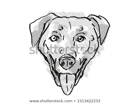 Chinook Dog Breed Cartoon Retro Drawing Stock photo © patrimonio