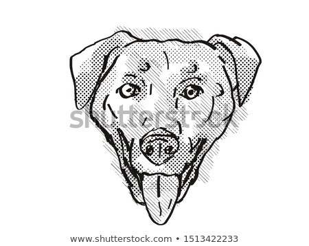 Stockfoto: Chinook Dog Breed Cartoon Retro Drawing