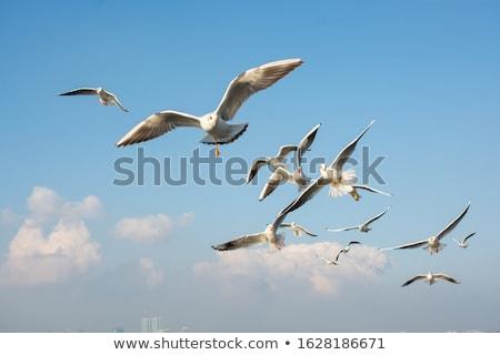 gaviota · vuelo · hermosa · agua · cielo - foto stock © prill