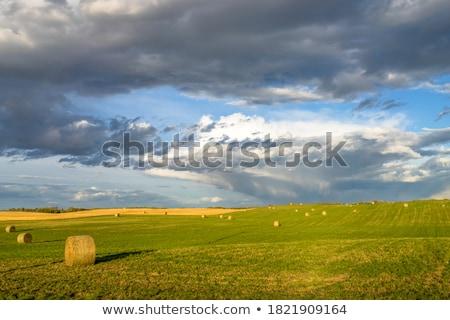 balya · saman · kış · kuru · tarım · alan - stok fotoğraf © hofmeester