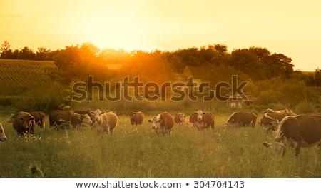 Najaar vee boom wolken gras bos Stockfoto © ondrej83