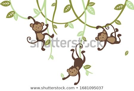 Monkey on the wall Stock photo © zastavkin