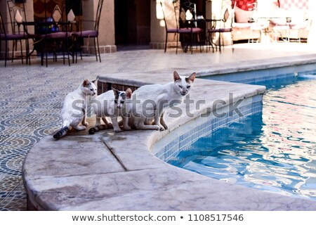 ペット 猫 モロッコ 農村 南 ストックフォト © ajlber