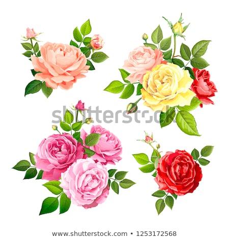 Amarelo rosa florescer flor Foto stock © zzve
