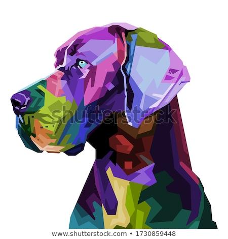 Magnifique noir chien sombre gris jeunes Photo stock © silense