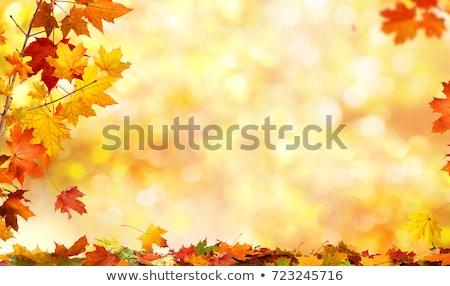 Stok fotoğraf: Sonbahar · akçaağaç · eps · vektör · dosya · gökyüzü