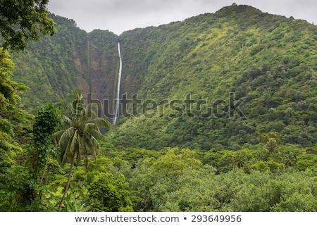 Mooie rivier vallei Hawaii eiland hemel Stockfoto © jarin13