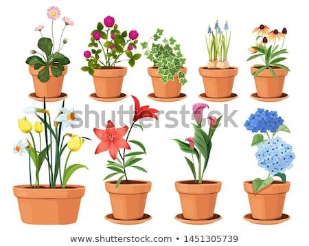 Tavasz fehér virágok virágcserép természet kék növény Stock fotó © art9858