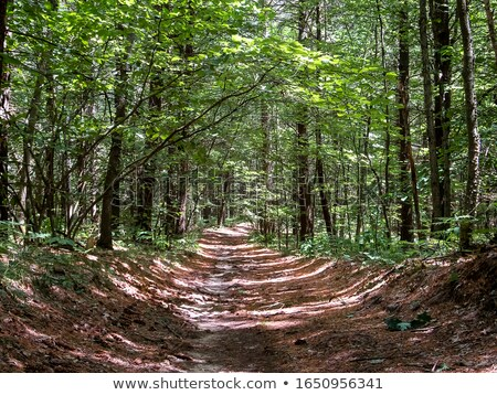 Pathway in secluded deciduous forest Stock photo © Anna_Om