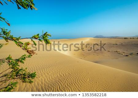 Corralejo dunes Fuerteventura island desert stock photo © lunamarina