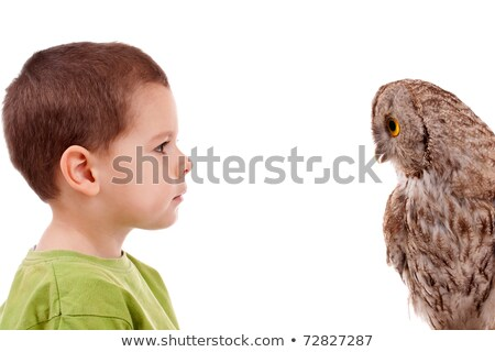 boy observing owl stock photo © grafvision