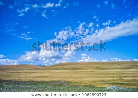 Grassland in the fall Stock photo © raywoo