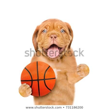 Stockfoto: Hond · bal · geïsoleerd · witte