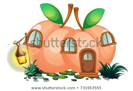 Pêssego casa lanterna jardim ilustração paisagem Foto stock © colematt