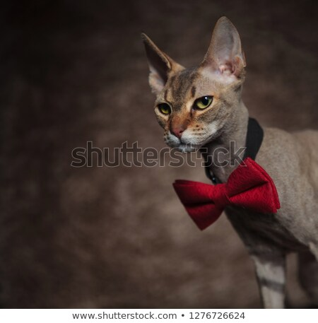 close up of elegant sphync cat looking down to side Stock photo © feedough