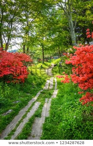 Flores rojas alrededor lago Japón paisaje parque Foto stock © daboost