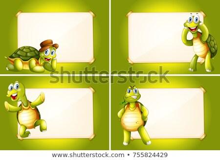 Négy keret zöld teknősök illusztráció művészet Stock fotó © colematt