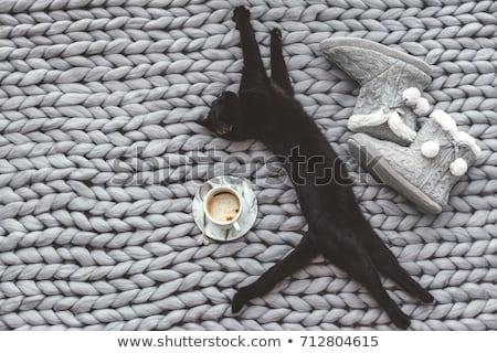 Pigro cat caduta soft Foto d'archivio © neirfy