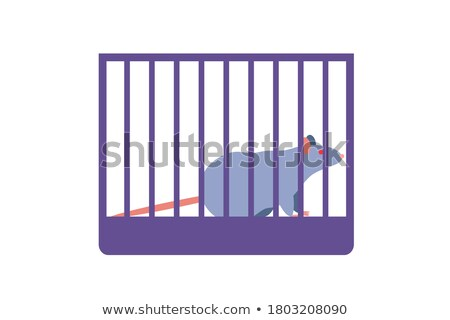 Mouse placed in cage Stock photo © jossdiim