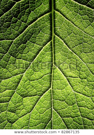 part of green leaf in close up Stock photo © gewoldi