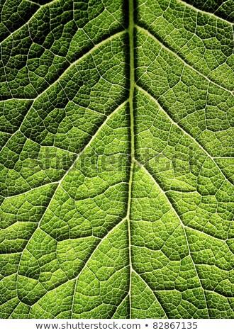 Groen blad mooie natuur blad schoonheid Stockfoto © gewoldi