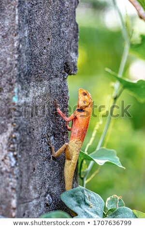 Lizard waiting for a prey. Stock photo © angelsimon